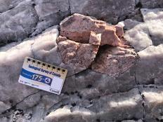 Feldspar megacryst in a pegmatite dike